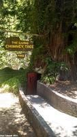 The Chimney Tree was created by a fire burning out its center.