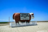 The Giant Steer of Buttonwillow