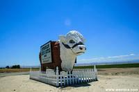 Several of these Giant Cows reside on roads throughout the United States.