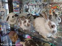 Former bunny residents of the museum