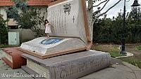 Giant Bellflower Books