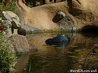A yellow eyed alligator guards the moat