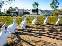 Six of the 14 bunnies that make up Bunny Henge.