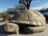 Murtle the Turtle in Joshua Tree