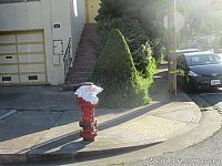 Painted Fire Hydrant in Brisbane