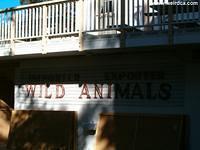Importer Exporter Wild Animals