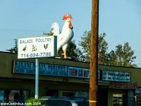 Midway City - Baladi Poultry