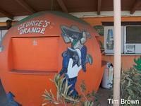 The Dixon Orange - Photo by Tim Brown