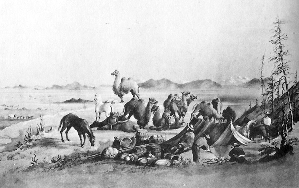 Camels of the American West