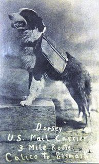 Dorsey, the mail carrying dog of Calico!