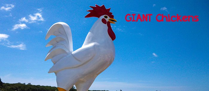 Over 30 giant roosters reside in California!